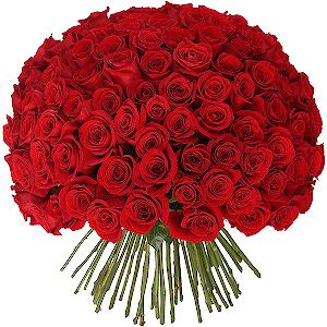 Купить розы оптом в тамбове доставка шариков и цветов в санкт-петербурге